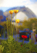 Sheila Smart - Poppies with Harbour...