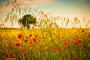Silvia Ganora Art - Poppies with tree in the distance by Silvia Ganora