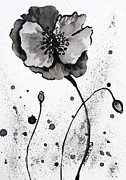 Maggie Turner - Poppy Black and White...