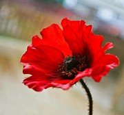 Museum Mile Prints - Poppy Print by Buster Brown