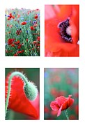 Ar Annahita Framed Prints - Poppy Field 1 Framed Print by AR Annahita