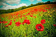 Landscape Framed Prints Posters - Poppy field and sky Poster by Raimond Klavins