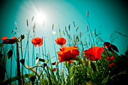Landscape Framed Prints Posters - Poppy field and sun Poster by Raimond Klavins