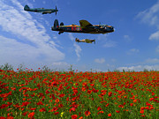 Bomber Escort Photo Framed Prints - Poppy Field Flypast Framed Print by Ken Brannen