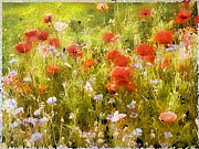 Poppies Field Digital Art - Poppy Field by Jessica Jenney