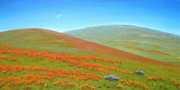 California Poppy Paintings - Poppy Fields of California by Jerome Stumphauzer