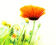 Daisy Drawings Metal Prints - Poppy Flower Metal Print by Natasha Denger