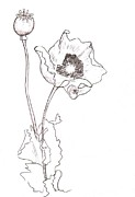 Bud Drawings Posters - Poppy Flower Sketch Poster by Sarah Loft