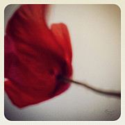 Renata Vogl - Poppy No.3