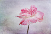 Beauty Art - Poppy Poem by Priska Wettstein