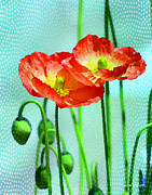 Garden Greeting Color Prints - Poppy series - Quite Print by Moon Stumpp