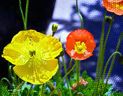 "\""flora Prints\\\"" Prints - Poppy series - Soaking up Sunbeams Print by Moon Stumpp"