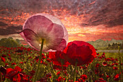 Farm Scenes Photos - Poppy Sunrise by Debra and Dave Vanderlaan