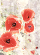 Poppy Three Print by Jerry Cordeiro