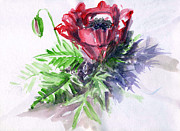 Bakhtiar Umataliev - Poppy. Watercolour Sketch