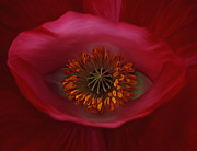 Saint Barbara Mixed Media Posters - Poppys Eye Poster by Barbara St Jean
