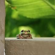 Frog Photo Metal Prints - Porch Frog Metal Print by Tania Morris