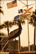 Kelly Morrow - Port Pelican