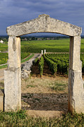 Grapevines Photo Posters - Portal  of vineyard.Burgundy. France Poster by Bernard Jaubert