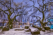 Winter Scenes Photos - Portland Twin Trees by Darren  White
