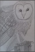 Original Print Drawings Originals - Portrait Barn Owl  by Melissa Nankervis