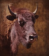 Stephanie Calhoun - Portrait of a Buffalo