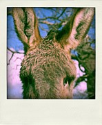 Donkey Framed Prints - Portrait of a donkey Framed Print by Bernard Jaubert