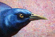 Bird Paintings - Portrait of a Grackle by James W Johnson