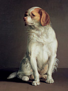 Spaniel Puppy Paintings - Portrait of a King Charles Spaniel by Louis Leopold Boilly