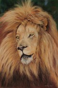 Mane Pastels - Portrait of a Lion by Jackie  Hill