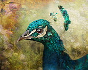 Portrait Of A Peacock Print by Pauline Fowler
