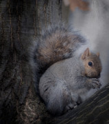 Kathy Rinker - Portrait Of A Squirrel