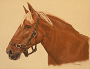 Print Pastels Posters - Portrait Of A Suffolk Punch Poster by Peter Chapman