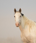Wild Horses Prints - Portrait of a Wild Mare Print by Carol Walker