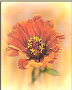Portrait Of A Zinnia Print by Larry Bishop
