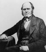 Creationism Posters - Portrait of Charles Darwin Poster by English Photographer