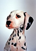 Pooch Paintings - Portrait of dalmatian dog by Lanjee Chee
