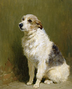 Doggies Paintings - Portrait of Pilu by John Charlton