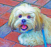 Puppy Digital Art Prints - Portrait Of Shih Tzu Print by Jane Schnetlage