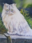Persian Cat Paintings - Portrait Of White Cat by Patricia Pushaw