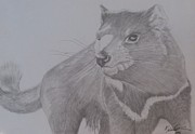 Pencil On Canvas Drawings Posters - Portrait Tasmanian Devil Poster by Melissa Nankervis