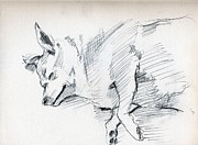 Sleeping Dog Drawings Posters - Posey Sleeping Poster by Whistler Kenworthy