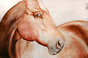 Horses Drawings - Posing by Cindy Elsharouni