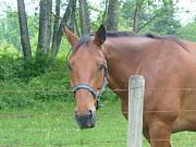 Nicki Bennett - Posing Horse
