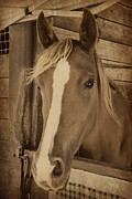 Forelock Photos - Posing  by Marilyn Wilson