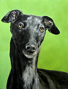 Lurcher Framed Prints - Posing princess Framed Print by Hannah Taylor