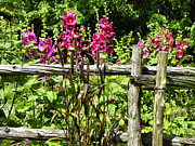 Split Rail Fence Photo Originals - Post Fence by Gene Cyr
