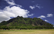 Postcard From Oahu Print by Joanna Madloch