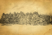 Winter Scene Digital Art Prints - Postcard Winter Print by Mary Timman
