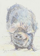 Mike Jory - Pot Bellied Pig
